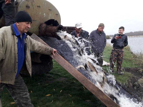 Протягом 2019 року у водойми Донеччини вселено понад 138 тонн молоді риби