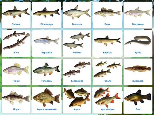 Методи визначення віку риб