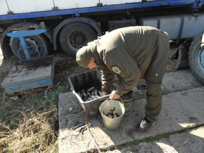 Протягом тижня у водойми Донецької області вселили понад 100 тис. екз. риб