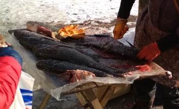 Рибоохоронцями Донеччини викрито 5 порушень за один день роботи