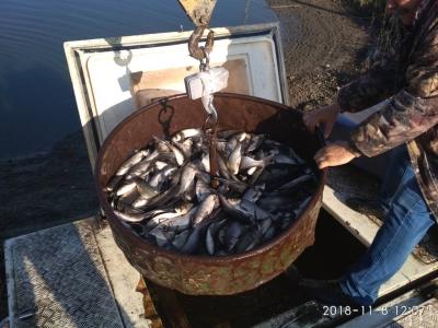 У листопаді до водойм Донецької області випустили 307 тис. екз. риб