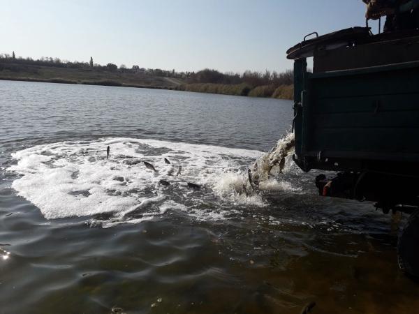 До водойм  Олександрівського та Добропільського районів Донецької області вселено 77 тис. екз. молоді риб
